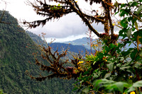 Cloud forest - just before the rain set in