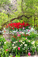 Massed plantings - mostly tulips at Giverney
